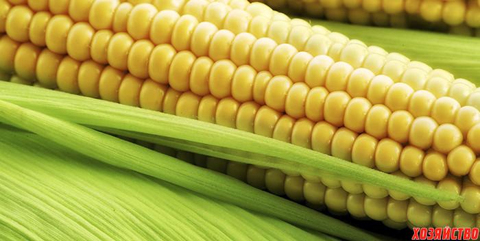 kukuruza.jpg