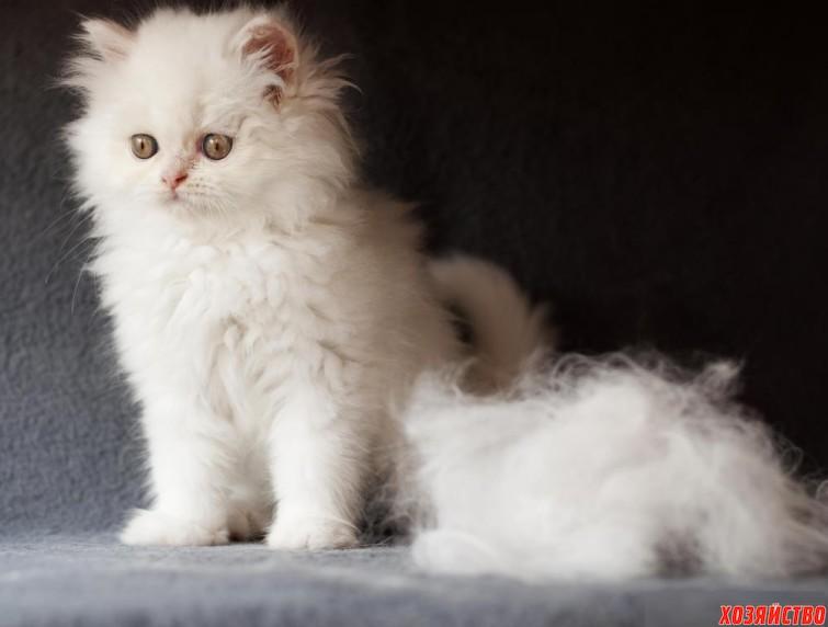 С кошки шерсть летит клочками.jpg