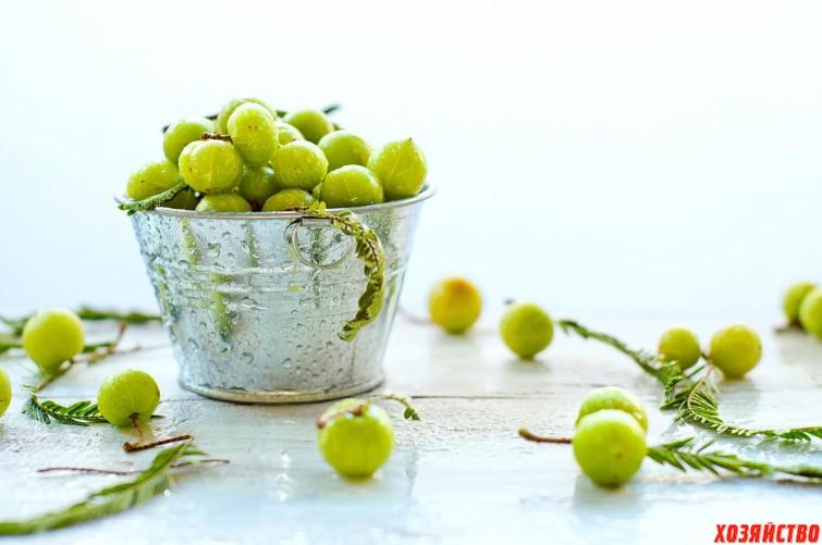 _gooseberries-1571659.jpg