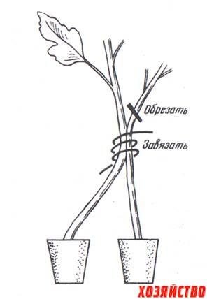 Два корня