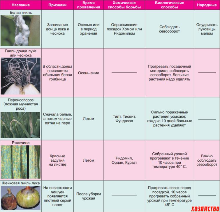 Калина уход и выращивание защита от вредителей 32