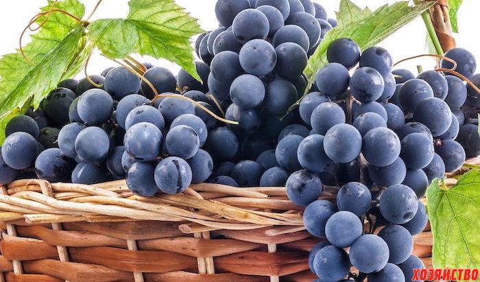 Три сорта винограда с черными ягодами, которые стоит посадить02.jpg