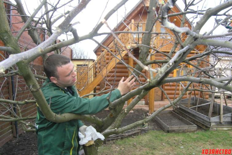 Лечим раны у плодовых деревьев правильными составами.JPG