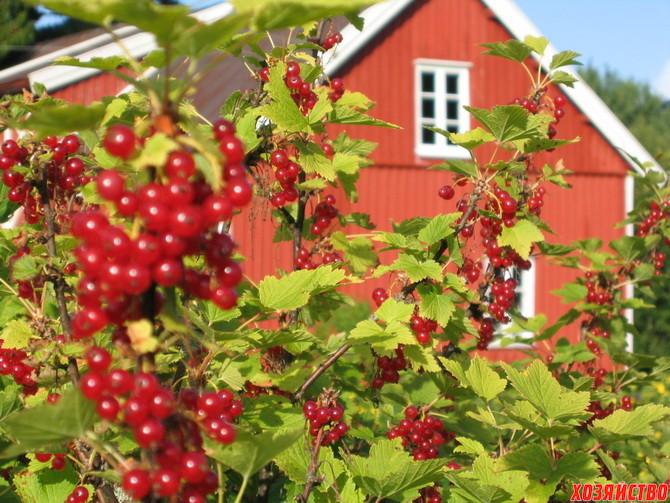 4-www.fruitshare.ca_.jpg