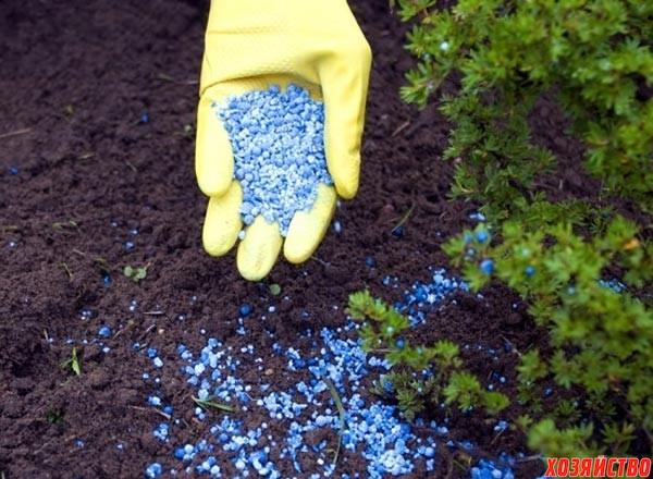 Как зависит урожайность сада от азотных удобрений2.jpg