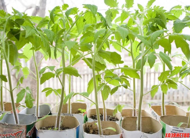 4 способа защитить рассаду от перерастания.jpg