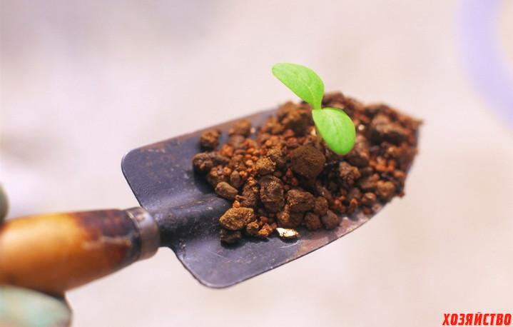 Подготовка к выращиванию рассады.jpg