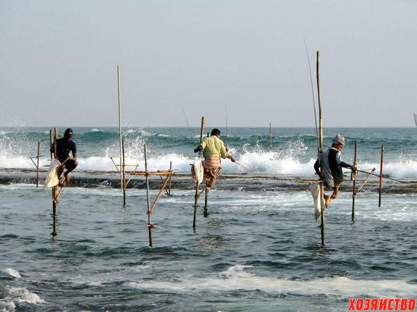 рыбалка в шри-ланке2.jpg
