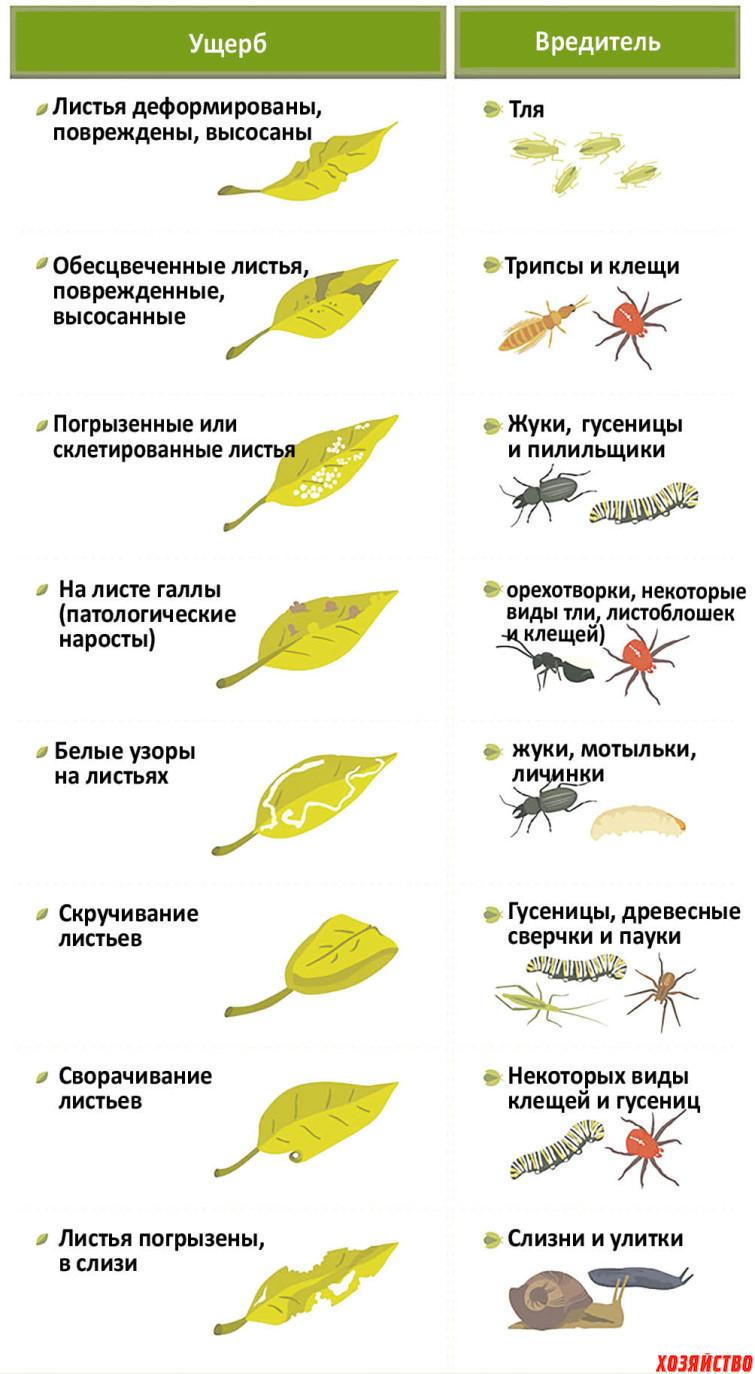 садовые инфографики-гот2.jpg