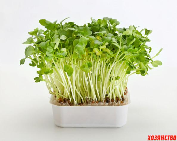 кресс-салат2.jpg