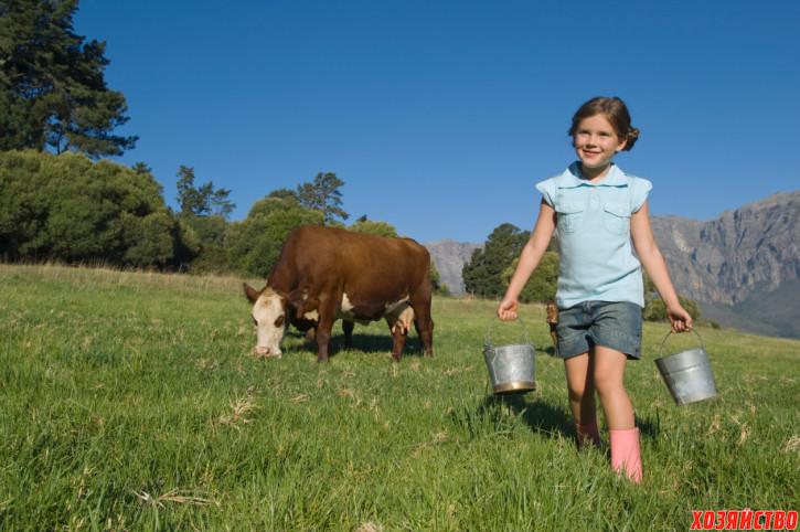 корова.jpg