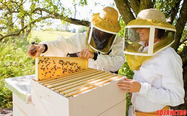 Домашнее пчеловодство.jpg