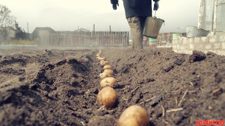 Посадка картошки.jpg
