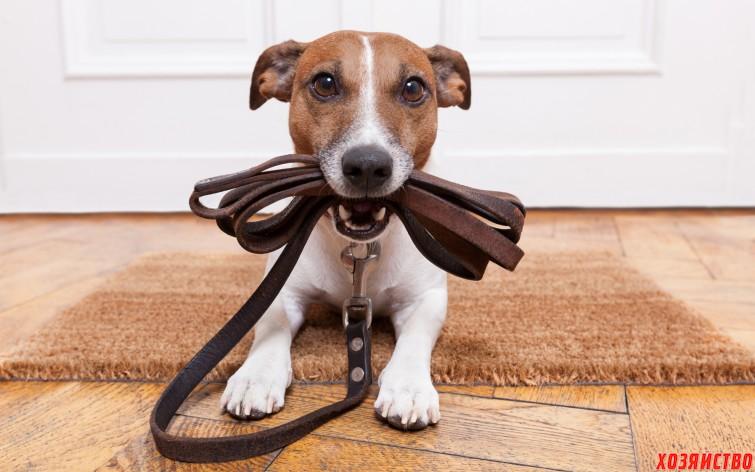 собака гуляет дома.jpg
