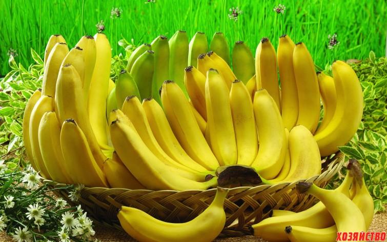 Удобрение из банановой кожуры.jpg