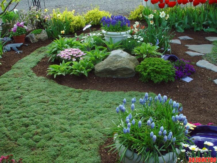 Растения-коврики для вашего цветника4.jpg