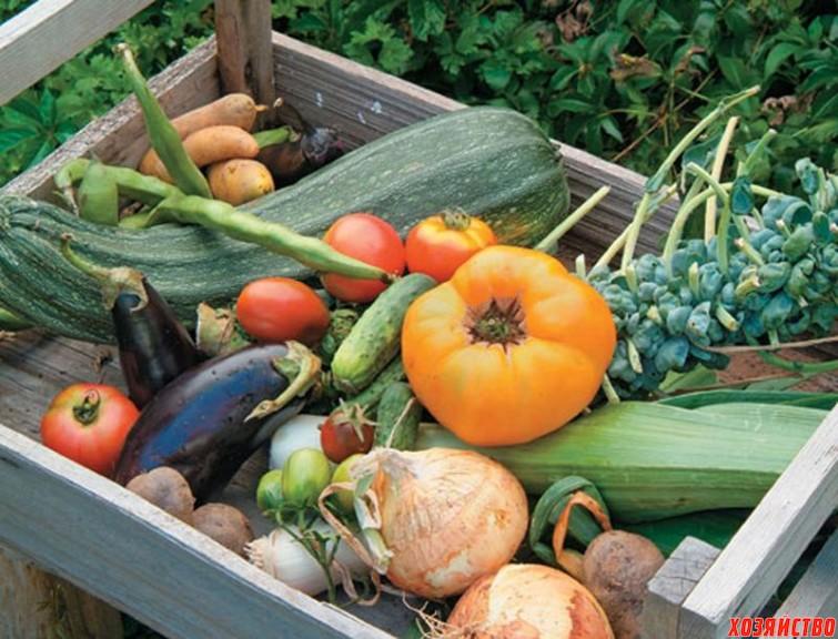 how-to-start-a-vegetable-garden1.jpg