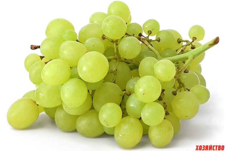 osvetlenie vinograda.png