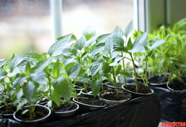 Рассада овощей, которую можно высадить в апреле.jpg