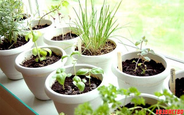 Сочная зелень круглый год2.jpg