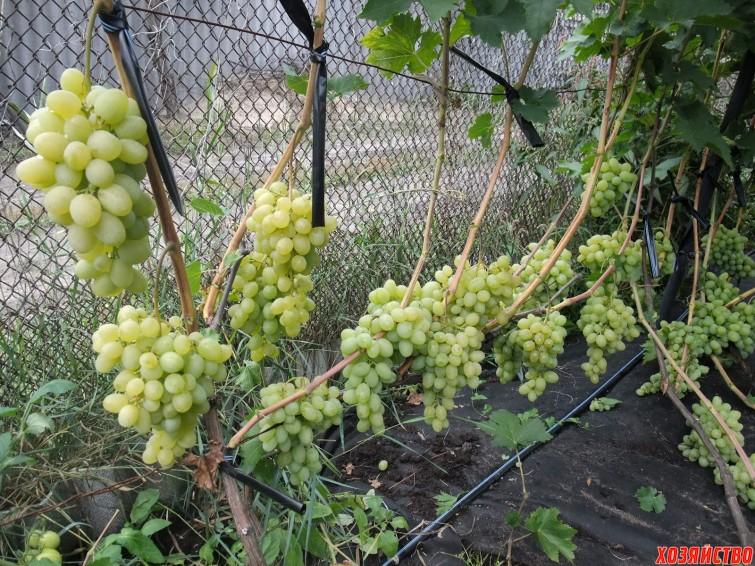 удобрения для виноградника.JPG