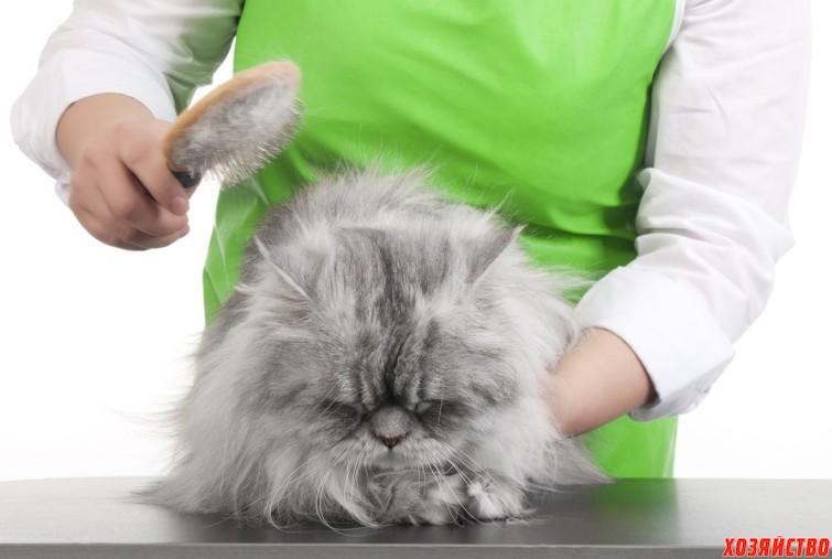 С кошки шерсть летит клочками2.jpg