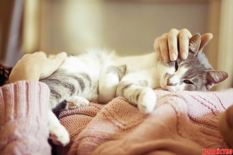 кошка.jpg
