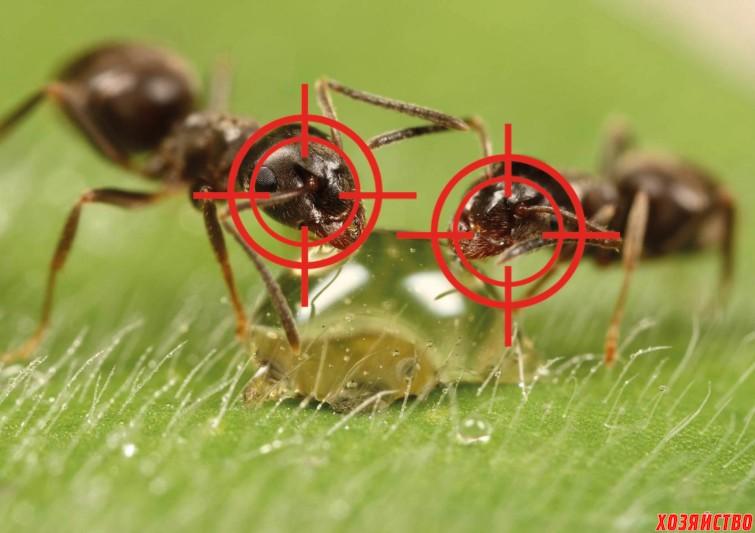 Как выгнать муравьев.jpg