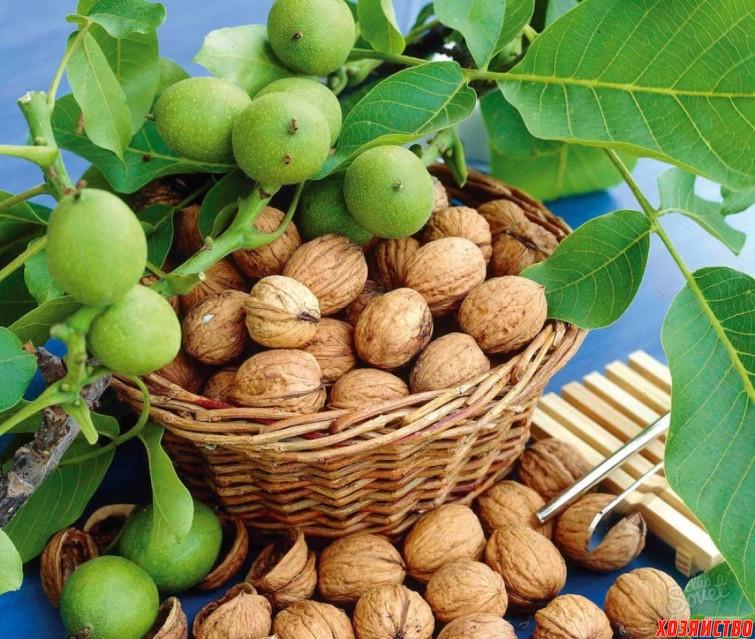 Листья ореха, как удобрение для огорода.jpg