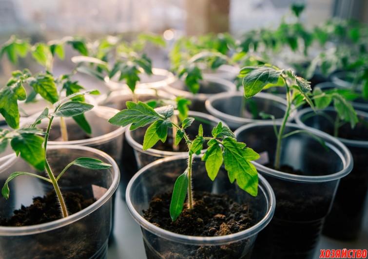 Грунт для рассады помидоров.jpg