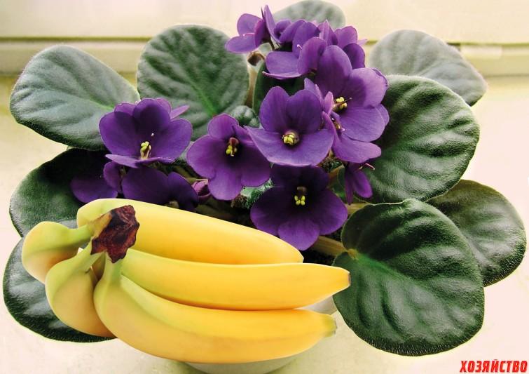 Бананы для комнатных цветов.jpg