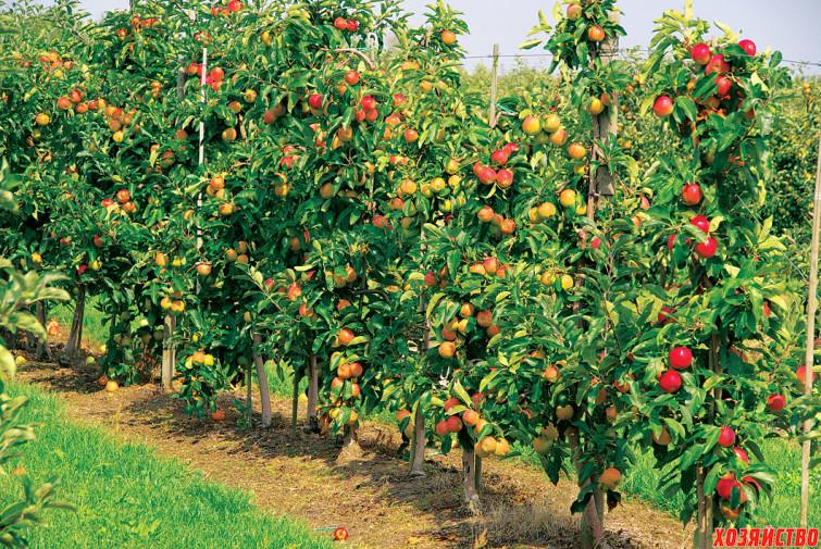 Карликовый сад – преимущества и недостатк01.jpg