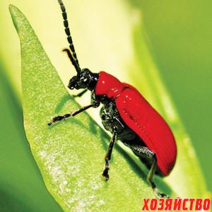 лилиевый жук.jpg