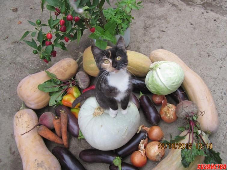 урожай с огорода под надежной охраной кота...