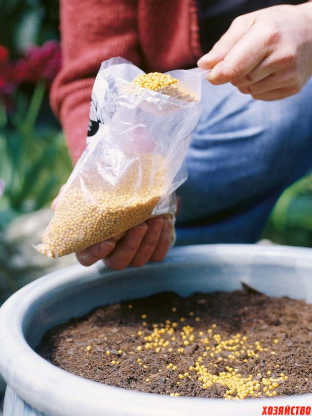 Fertilizer2.jpg