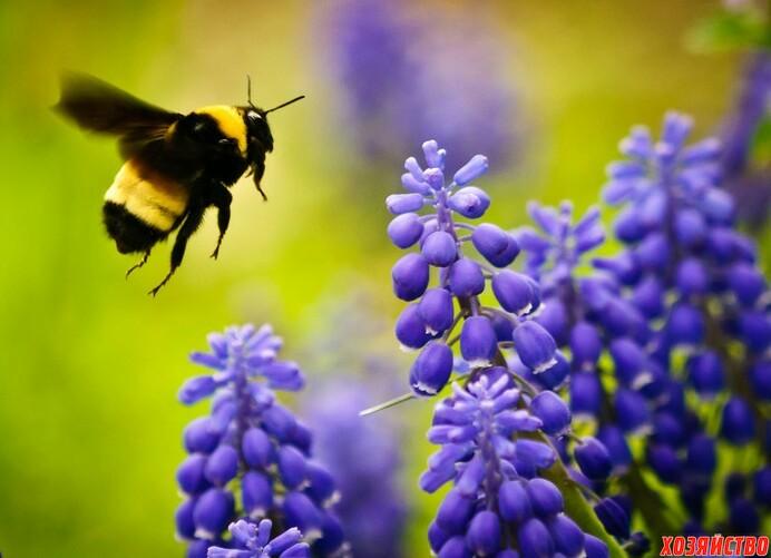 Плохое опыление Пригласите пчел.jpg