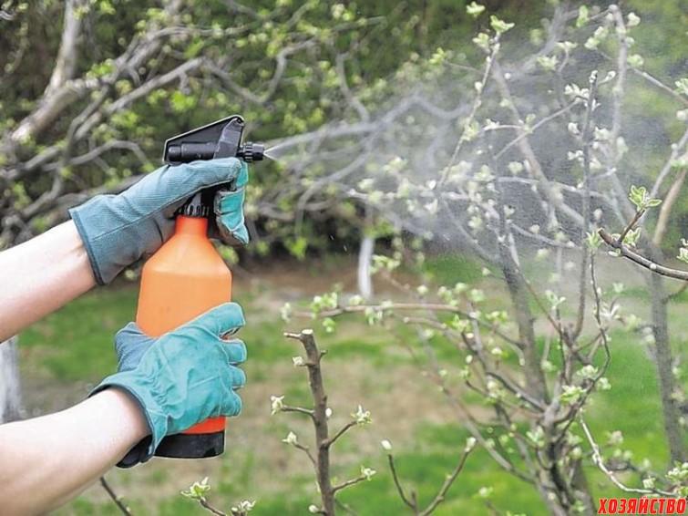 Чем опрыскать сад до и после цветения  2.jpg