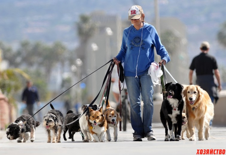 Присмотр и выгул домашних животных.jpg