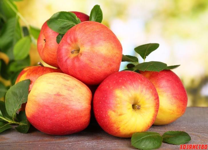 Современные сорта яблонь – альтернатива «старичкам»  2.jpg