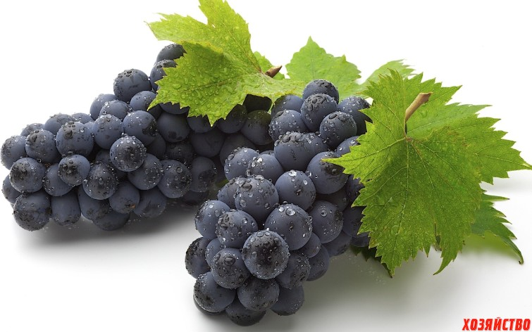 лучших черных сортов винограда.jpg