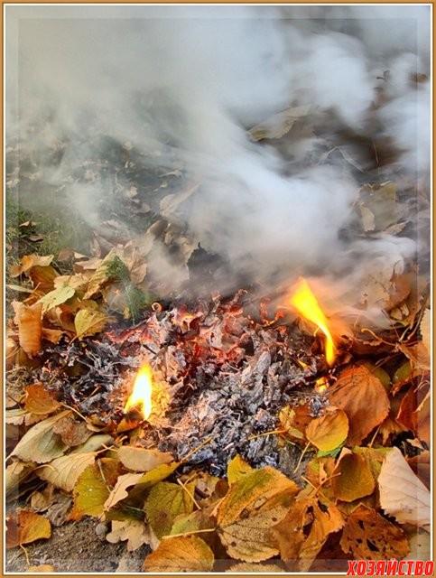 Можно ли сжигать опавшую листву весной2.jpg