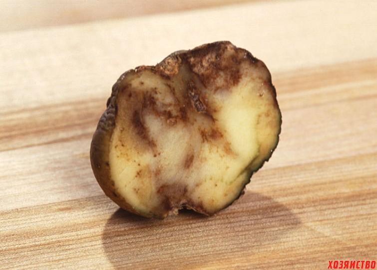 Резиновая гниль картофеля2.jpg