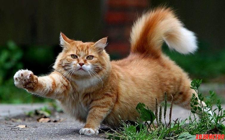 Забавная история о наглом рыжем коте2.jpeg
