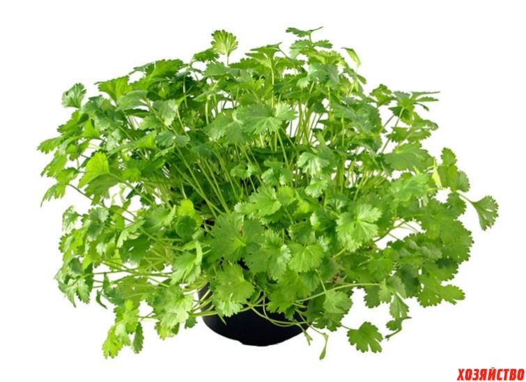 Сочная зелень круглый год4.jpg