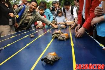 Гонки черепах.jpg