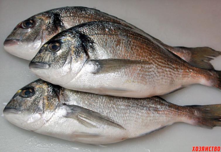 svejaya riba.jpg
