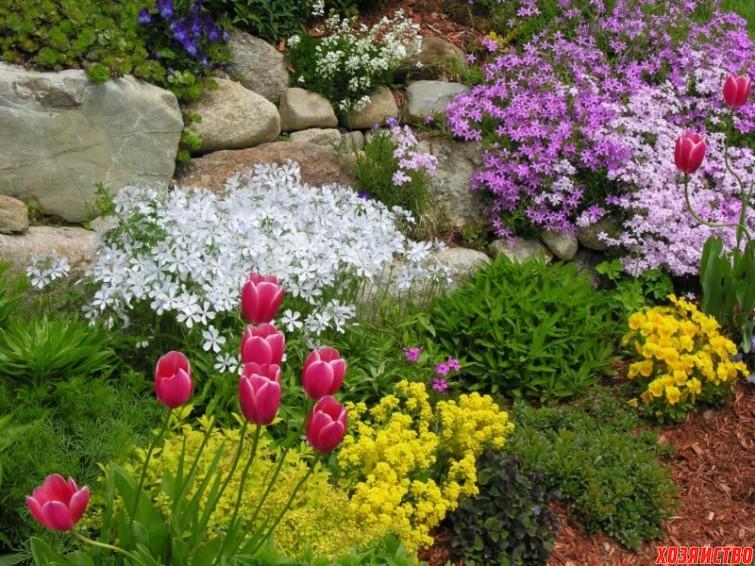 Растения для альпинария.jpg