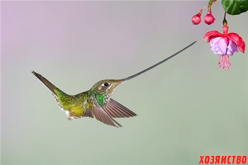 колибри.jpg