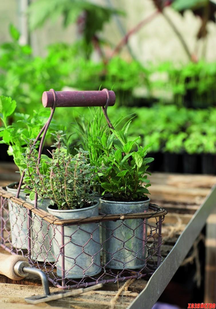 Krydderurter i zinkpotter.jpg