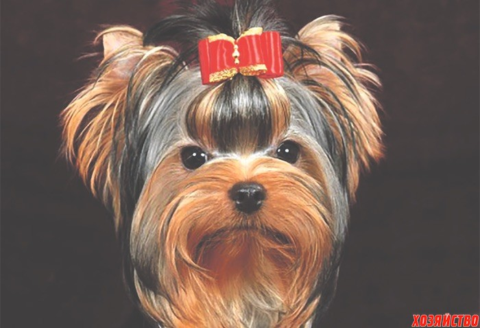 Какая модная порода собак в этом году